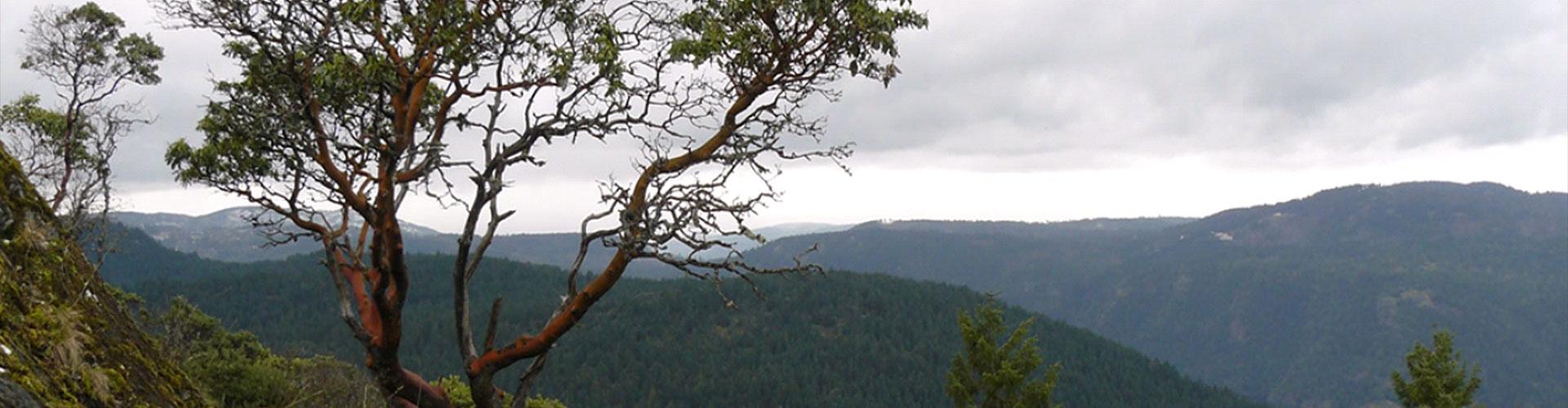 Tree2-edit